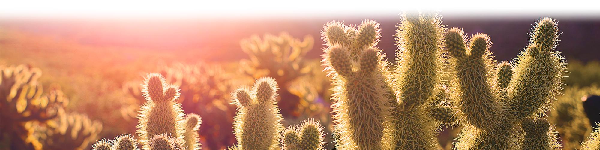background image of cacti